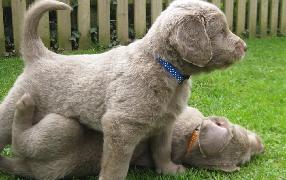 Butcher S Pet Care Reviews Http Www Butchersdogfood Co Uk