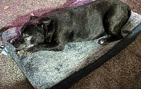 Snooza Pet Products Bewertung Https